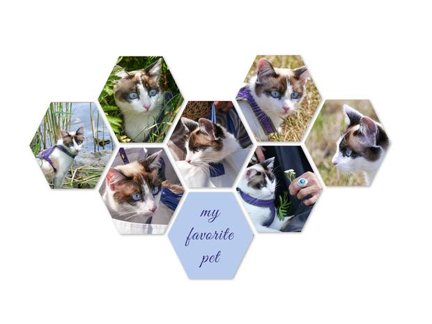 Hexagon collage met meerdere fotos